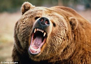 bear11