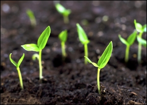 Little-sprouts_-Grow-bean-sprouts-in-your-back-garden