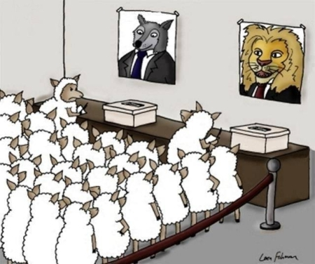 sheep-on-voting-for-a-lion-or-a-wolf-on-election-day